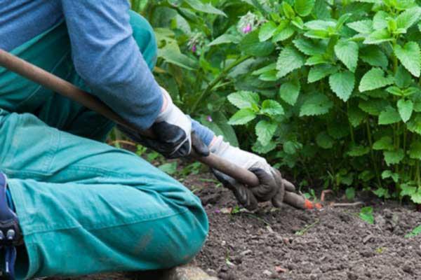 Gartenarbeiten und Objektbetreuung Dienstleistungen der Jugendhilfe Köln